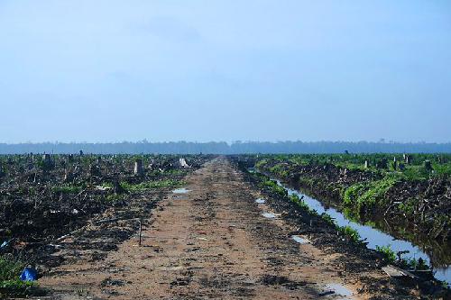 Deforestation due to oil palm exploitation in Sumatra